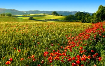 Earth - Flower Wallpapers and Backgrounds ID : 268462