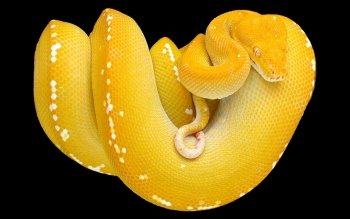 Animal - Python Wallpapers and Backgrounds ID : 270232