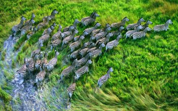 Animal - Zebra Wallpapers and Backgrounds ID : 273942