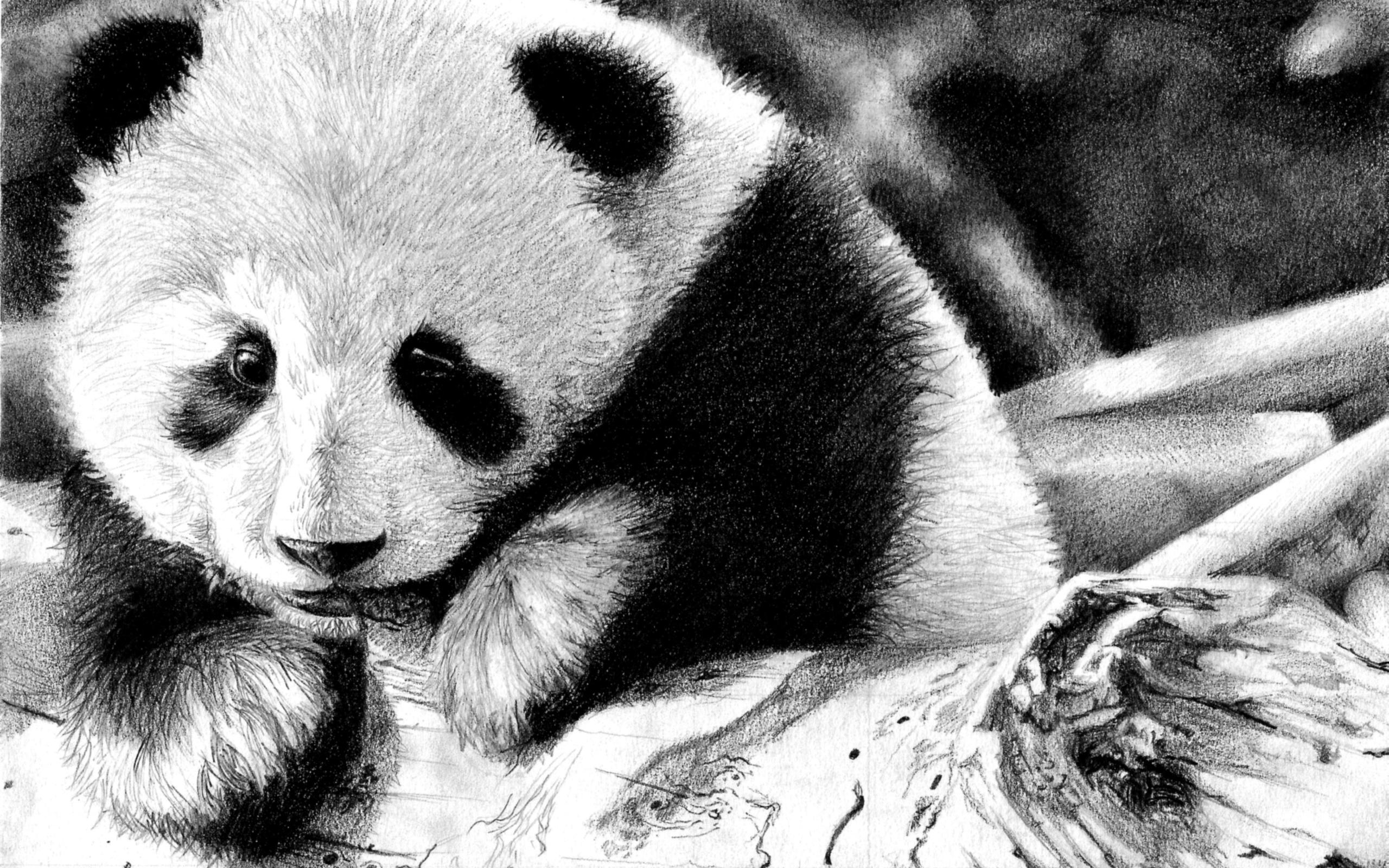 192 Panda HD Wallpapers | Backgrounds - Wallpaper Abyss ...