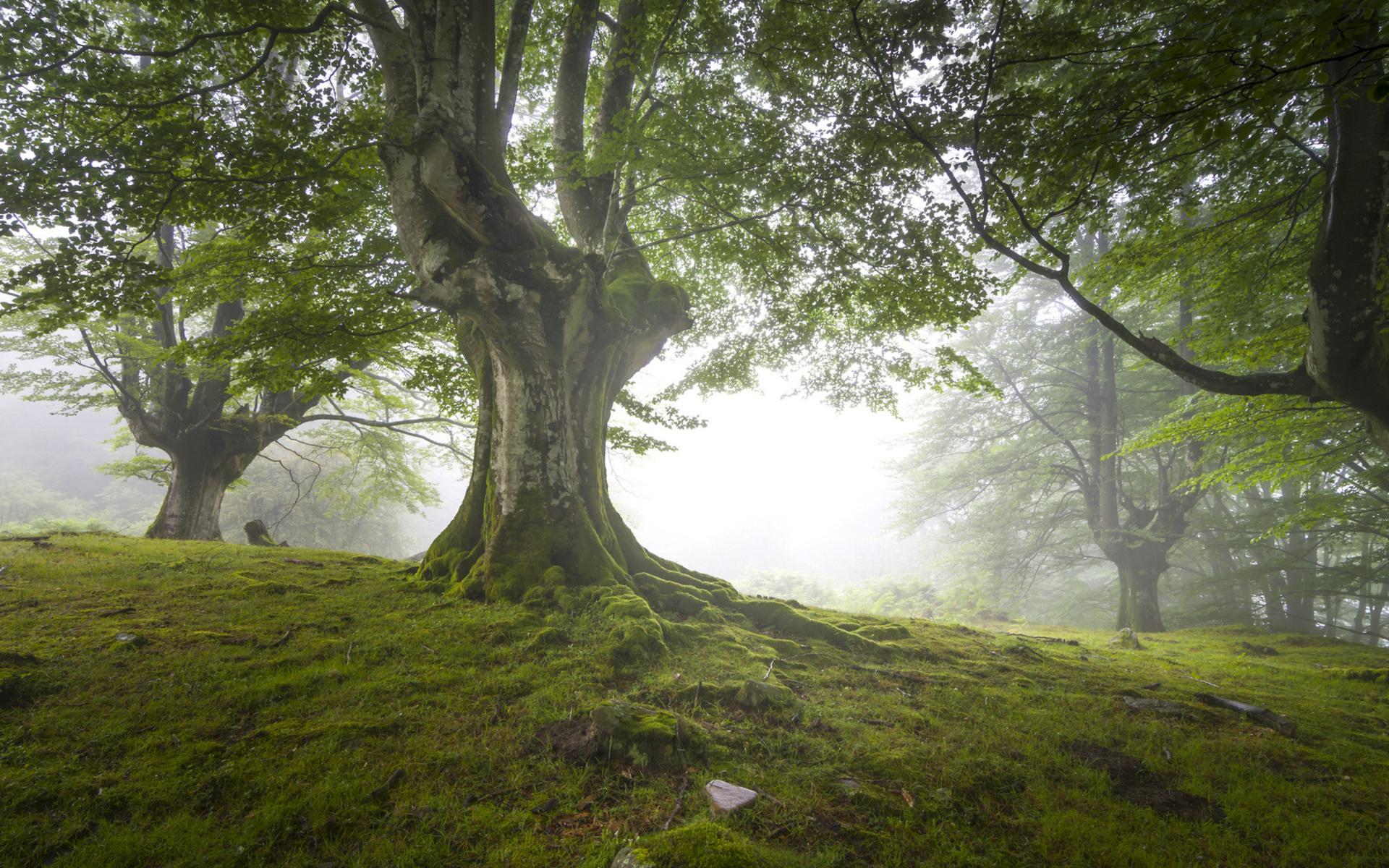 Earth - Tree  Landscape Grass Wallpaper