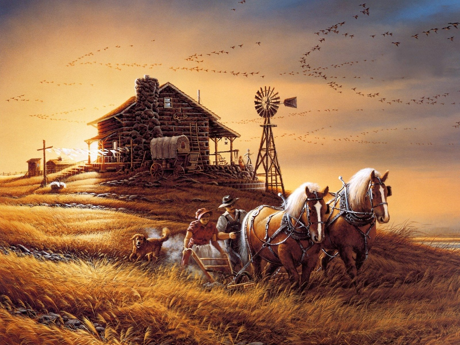 For Amber Waves Of Grain Wallpaper And Background Image