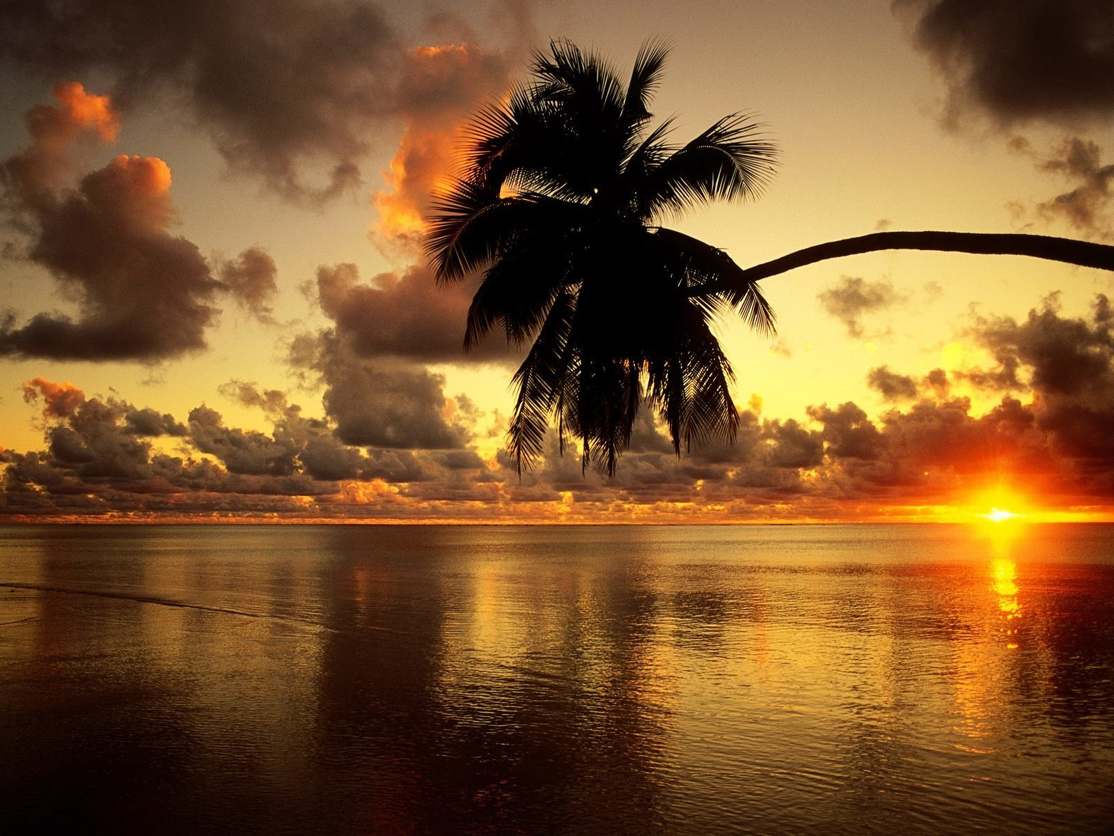 Wallpapers ID:282152