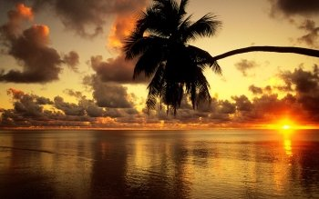 Fotografía - Tropical Wallpapers and Backgrounds ID : 282152