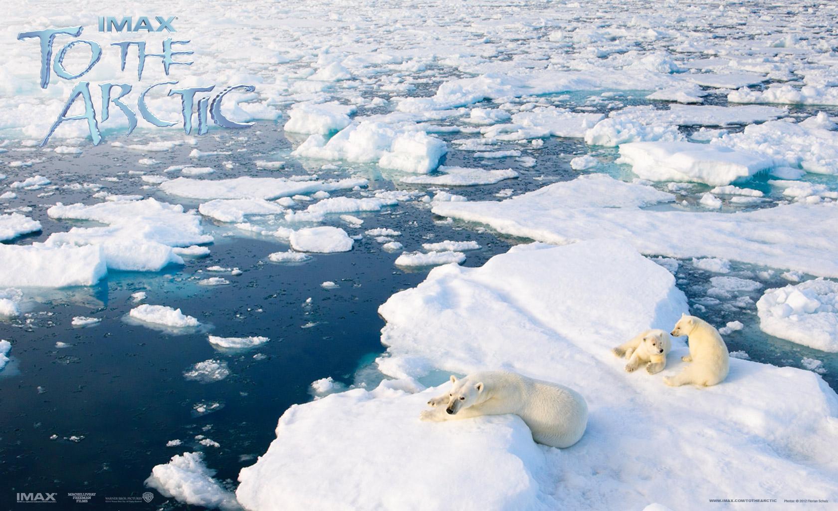 wallpaper arctic wallpapers 2 - photo #2