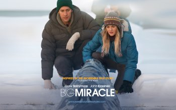 Movie - Big Miracle Wallpapers and Backgrounds ID : 284512