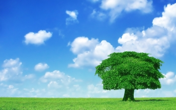 Earth - Tree Wallpapers and Backgrounds ID : 32800