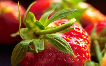Alimento - Strawberry Wallpapers and Backgrounds ID : 37130