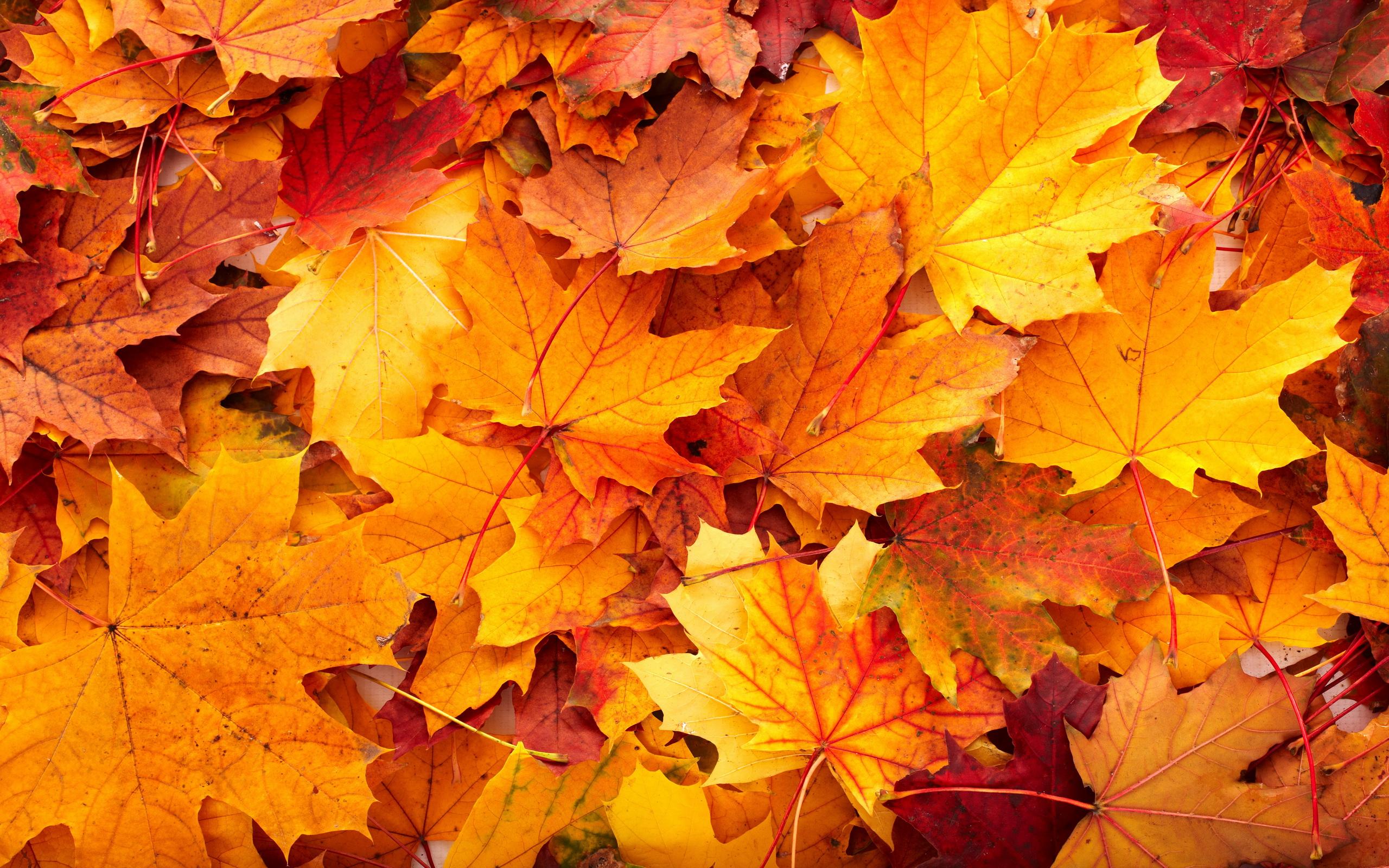 Fall HD Wallpaper  Background Image  2560x1600  ID:437605