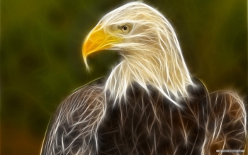Animal - Eagle Wallpapers and Backgrounds