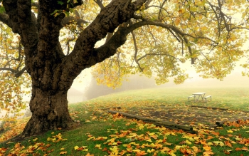 Man Made - Bench Wallpapers and Backgrounds ID : 440338