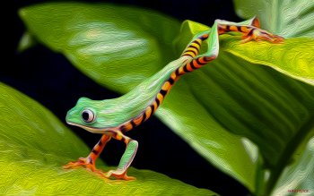 Animal - Tree Frog Wallpapers and Backgrounds ID : 441789