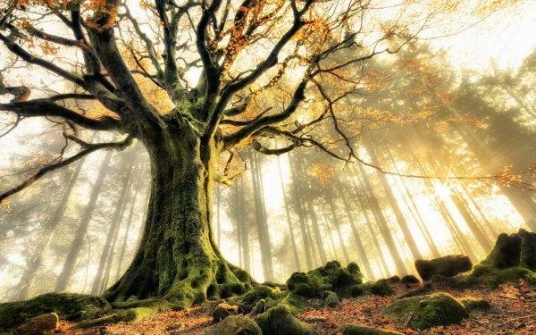 Terre/Nature Arbre Arbres Automne Fond d'écran HD | Arrière-Plan