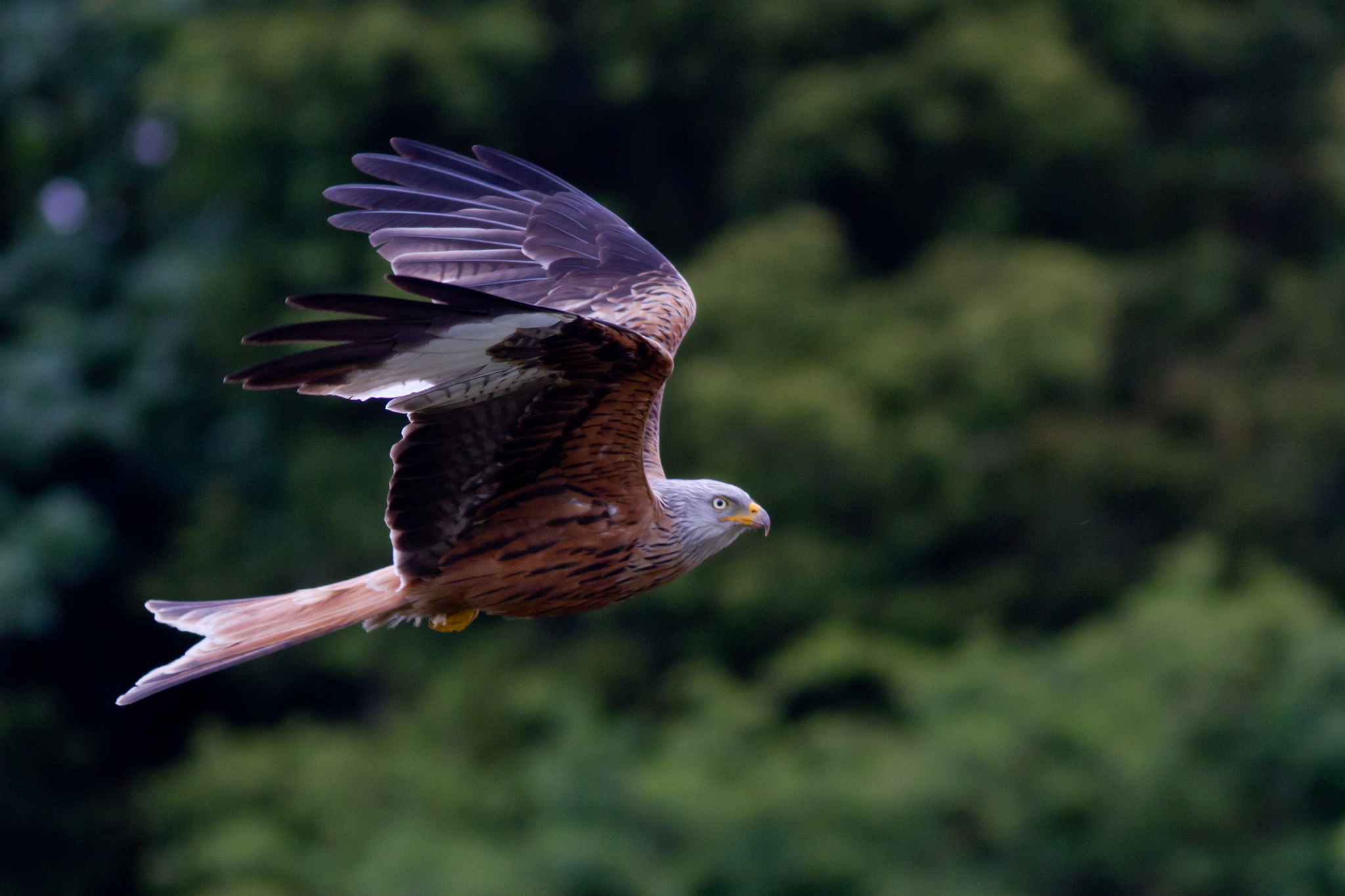Hawk full hd wallpaper and background image 2048x1365 - Hawk iphone wallpaper ...