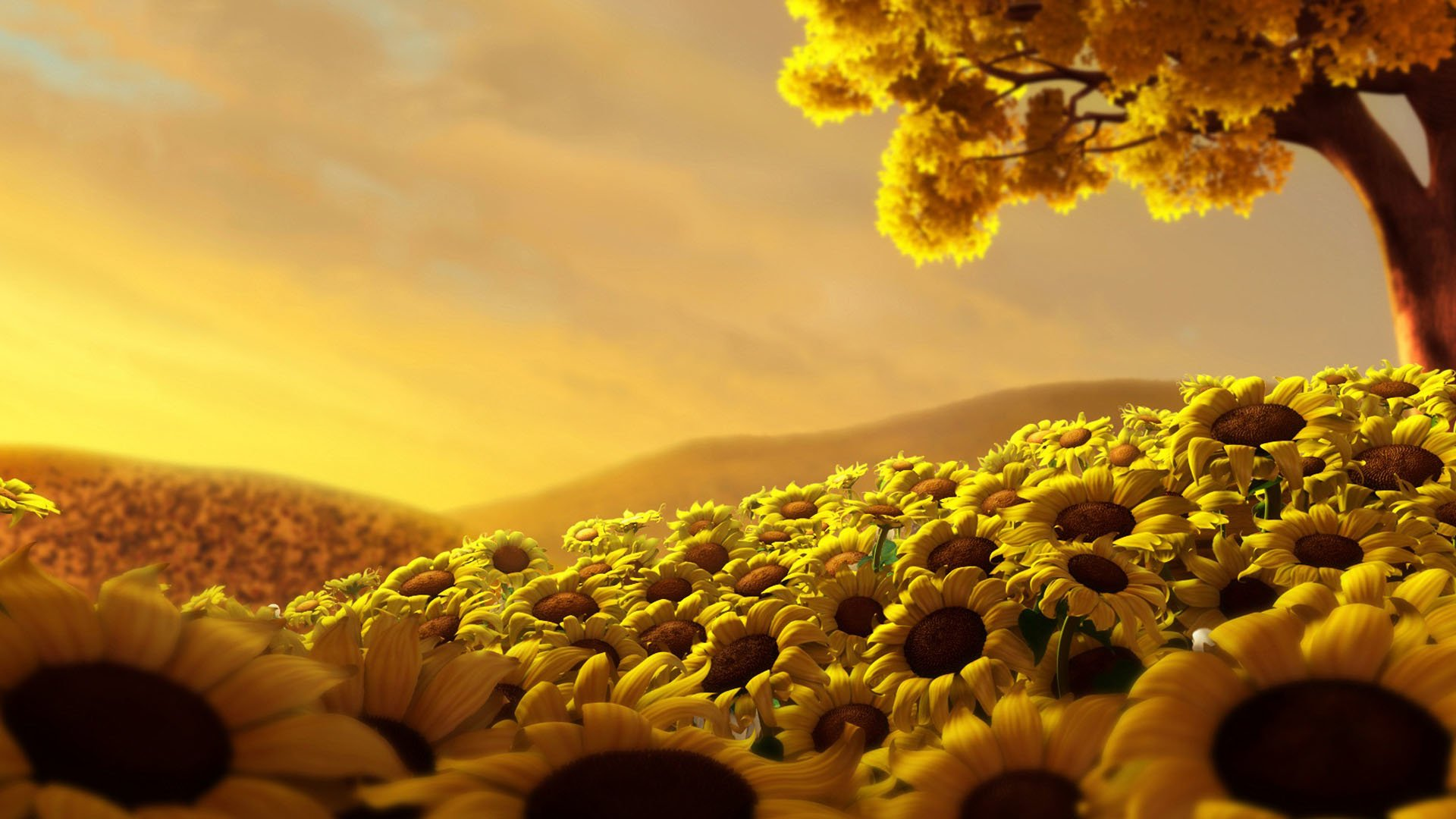 435 sunflower hd wallpapers | background images - wallpaper abyss