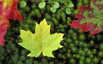 Earth - Leaf Wallpapers and Backgrounds ID : 443570