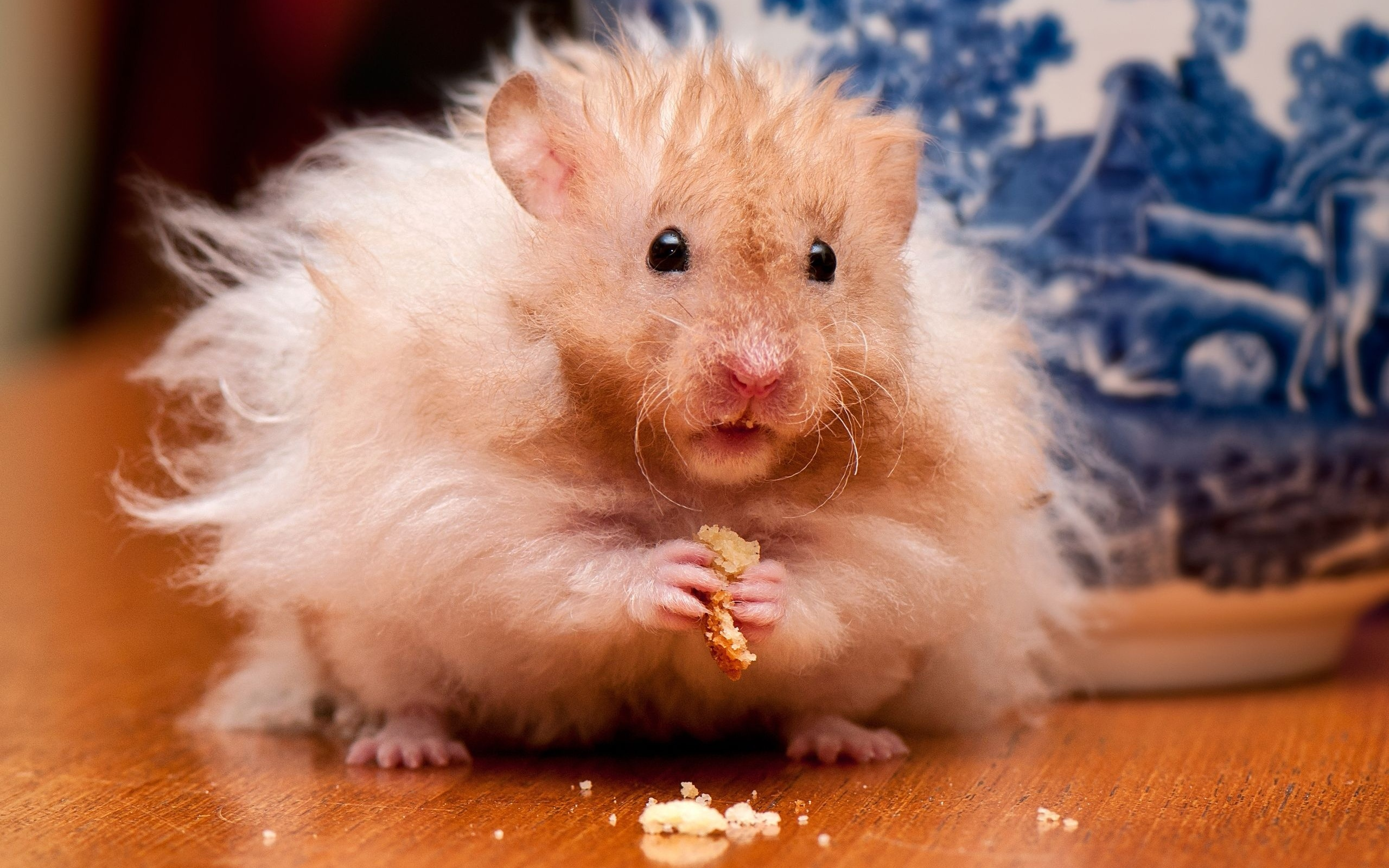 hamster full hd fond d 39 cran and arri re plan 2560x1600 id 444015. Black Bedroom Furniture Sets. Home Design Ideas