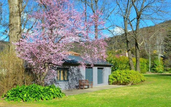Man Made House Buildings Building Tree Blossom Australia Bench Lithgow HD Wallpaper | Background Image