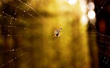 Animal - Spider Wallpapers and Backgrounds ID : 447784