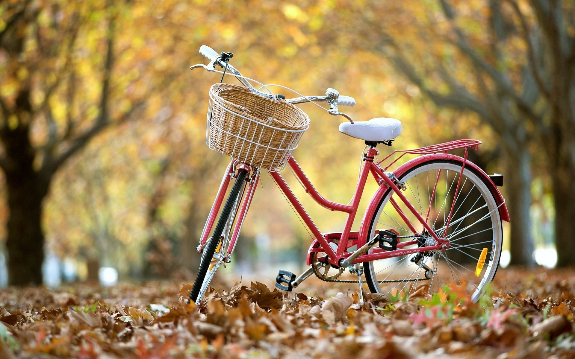 Bicycle Hd Wallpaper Background Image 1920x1200 Id449541