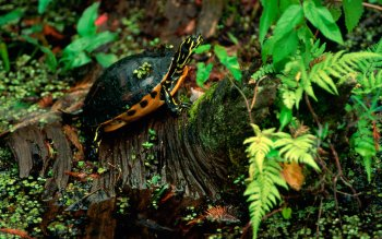 Animalia - Tortuga Wallpapers and Backgrounds ID : 451105