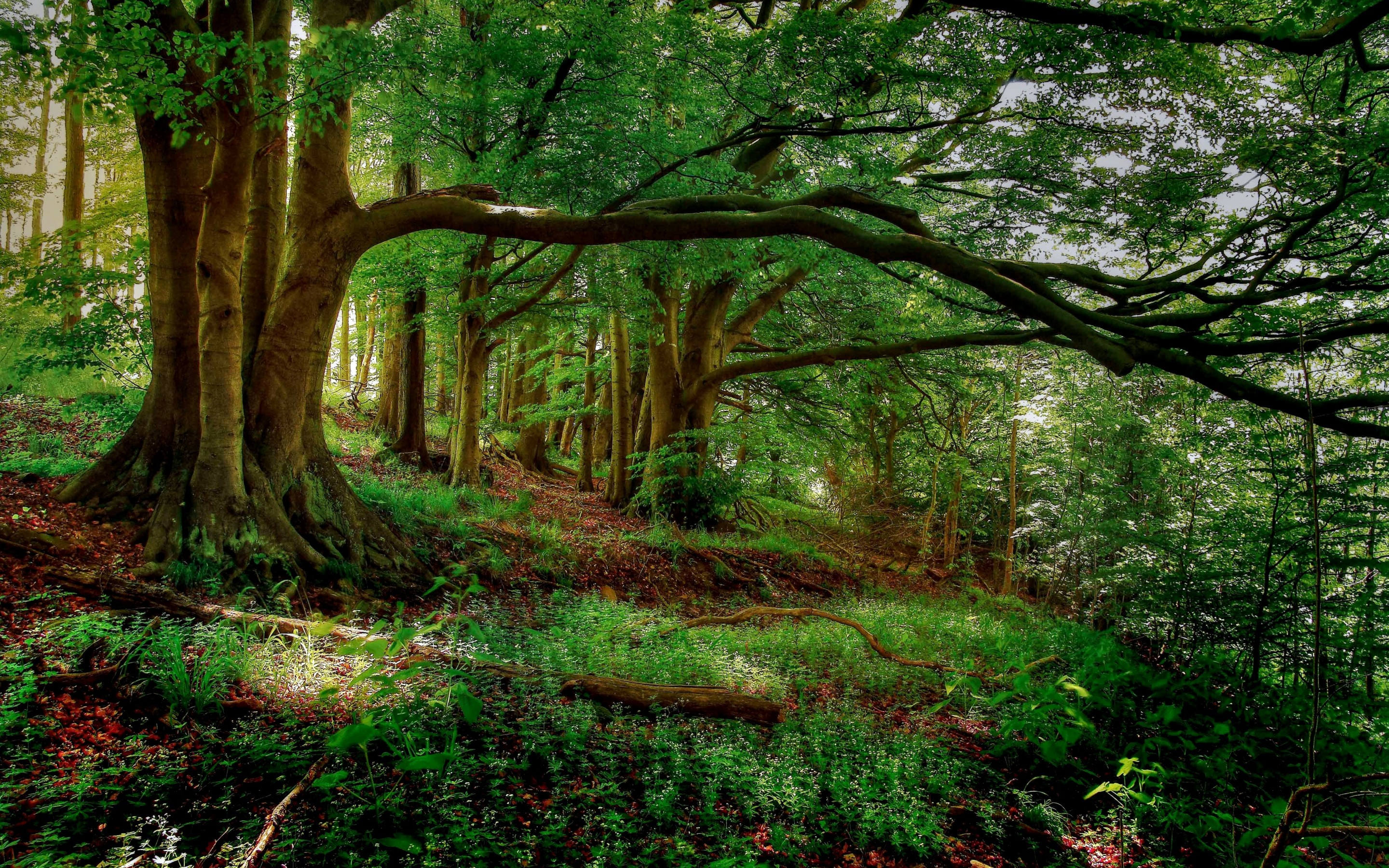 Forest Hd Wallpaper Background Image 2880x1800 Id