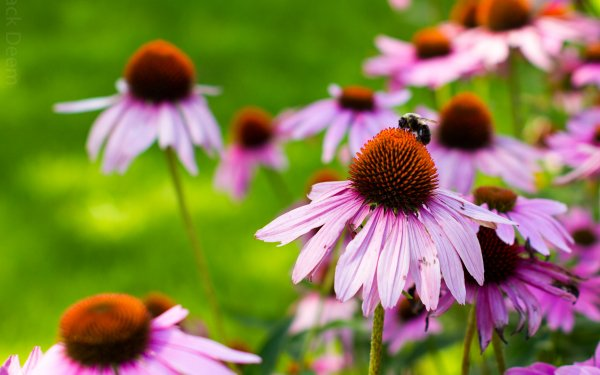 Earth Flower Flowers Nature Bee HD Wallpaper   Background Image