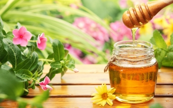 Food - Honey Wallpapers and Backgrounds ID : 459402