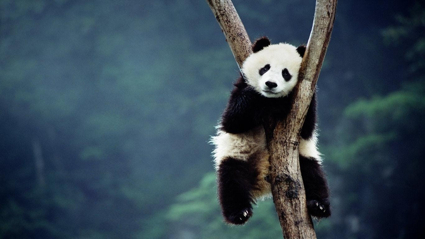 Download 400+ Wallpaper Abyss Panda