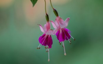Earth - Fuchsia Wallpapers and Backgrounds ID : 462224