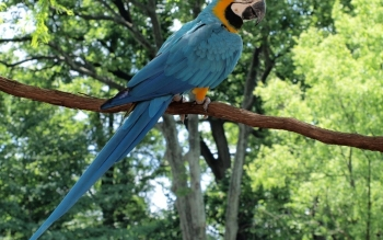 Animal - Macaw Wallpapers and Backgrounds ID : 463921