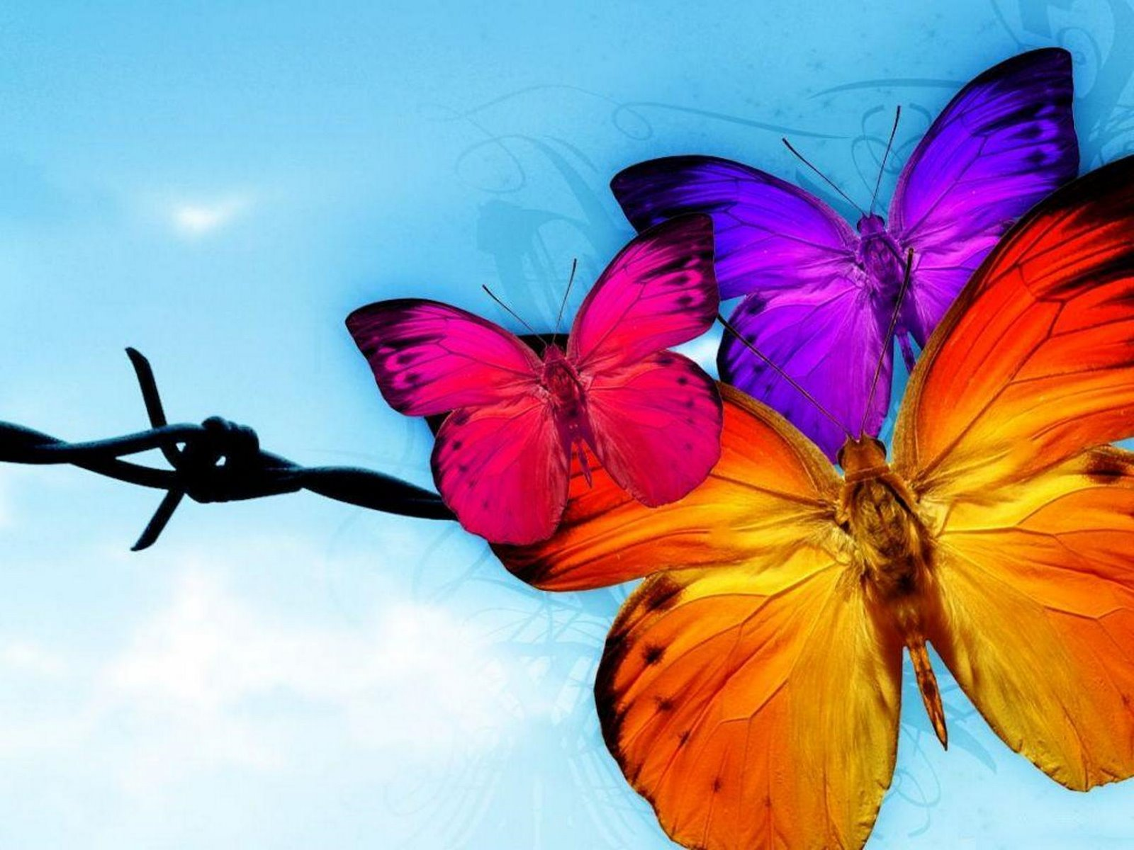 Butterfly Wallpaper And Background Image