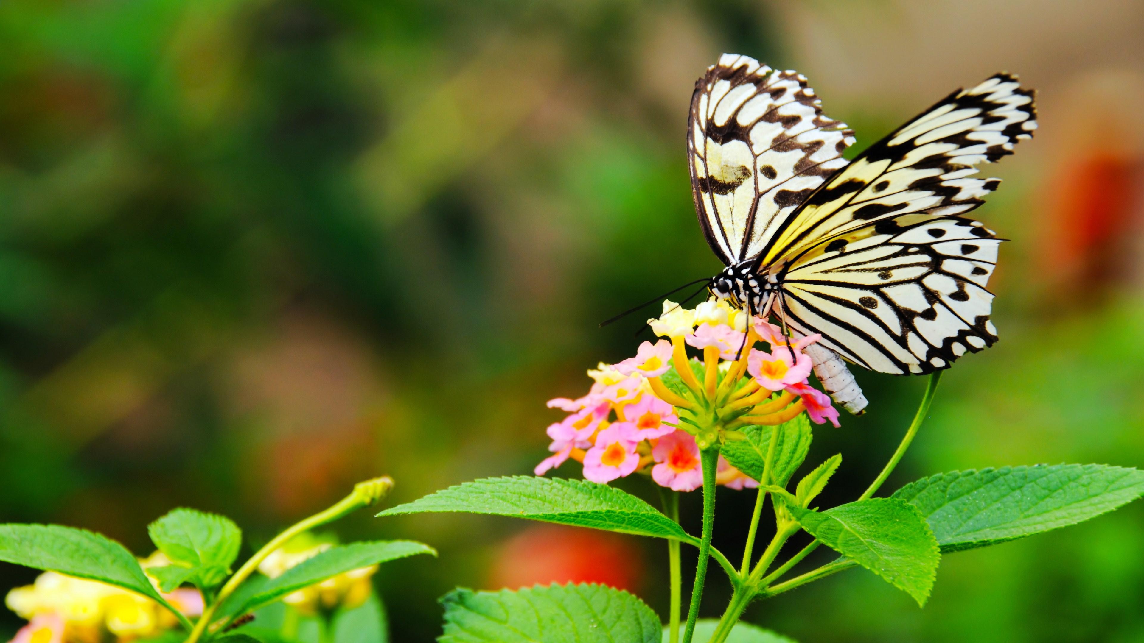 Butterflies 4k ultra hd wallpaper background image 3840x2160 id 467026 wallpaper abyss - Ultra 4k background images ...