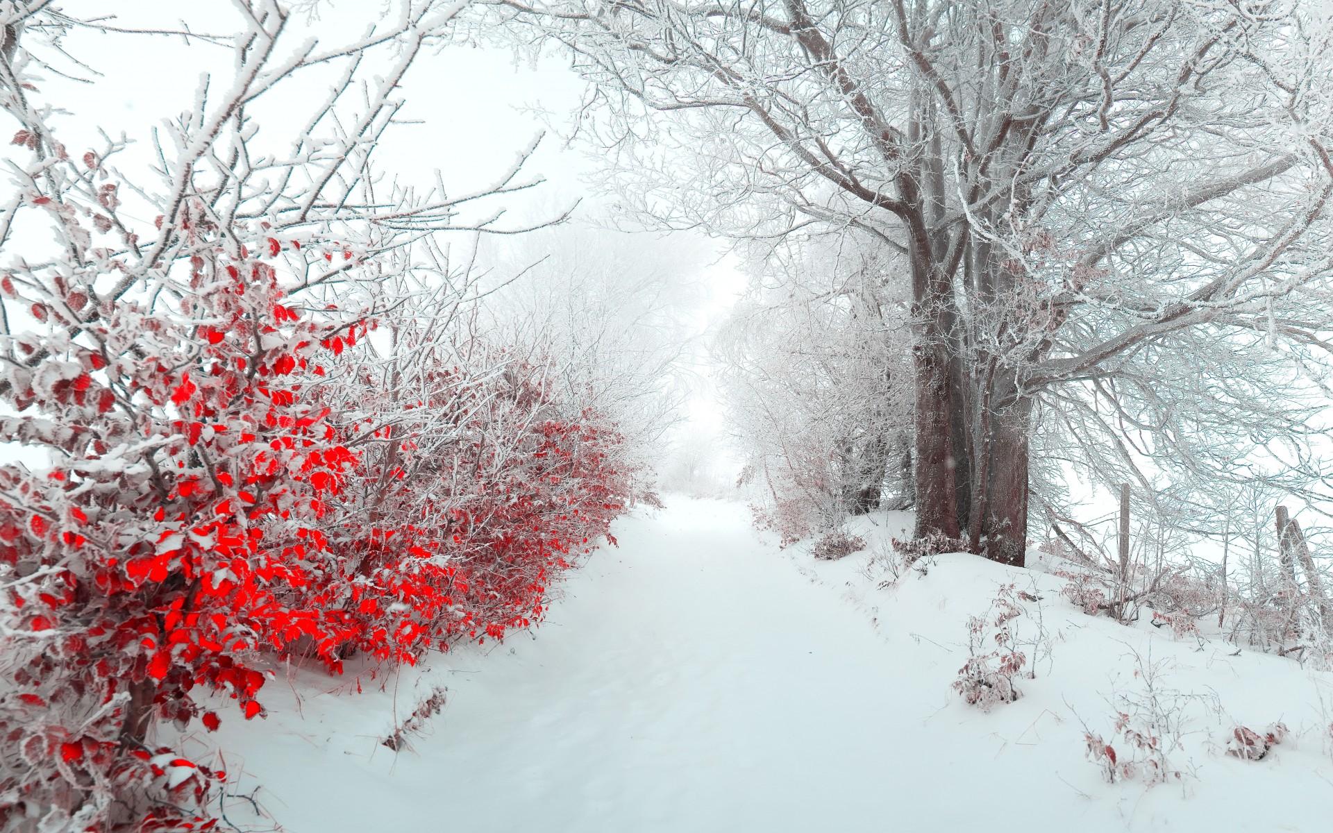 雪と赤い葉のコントラスト