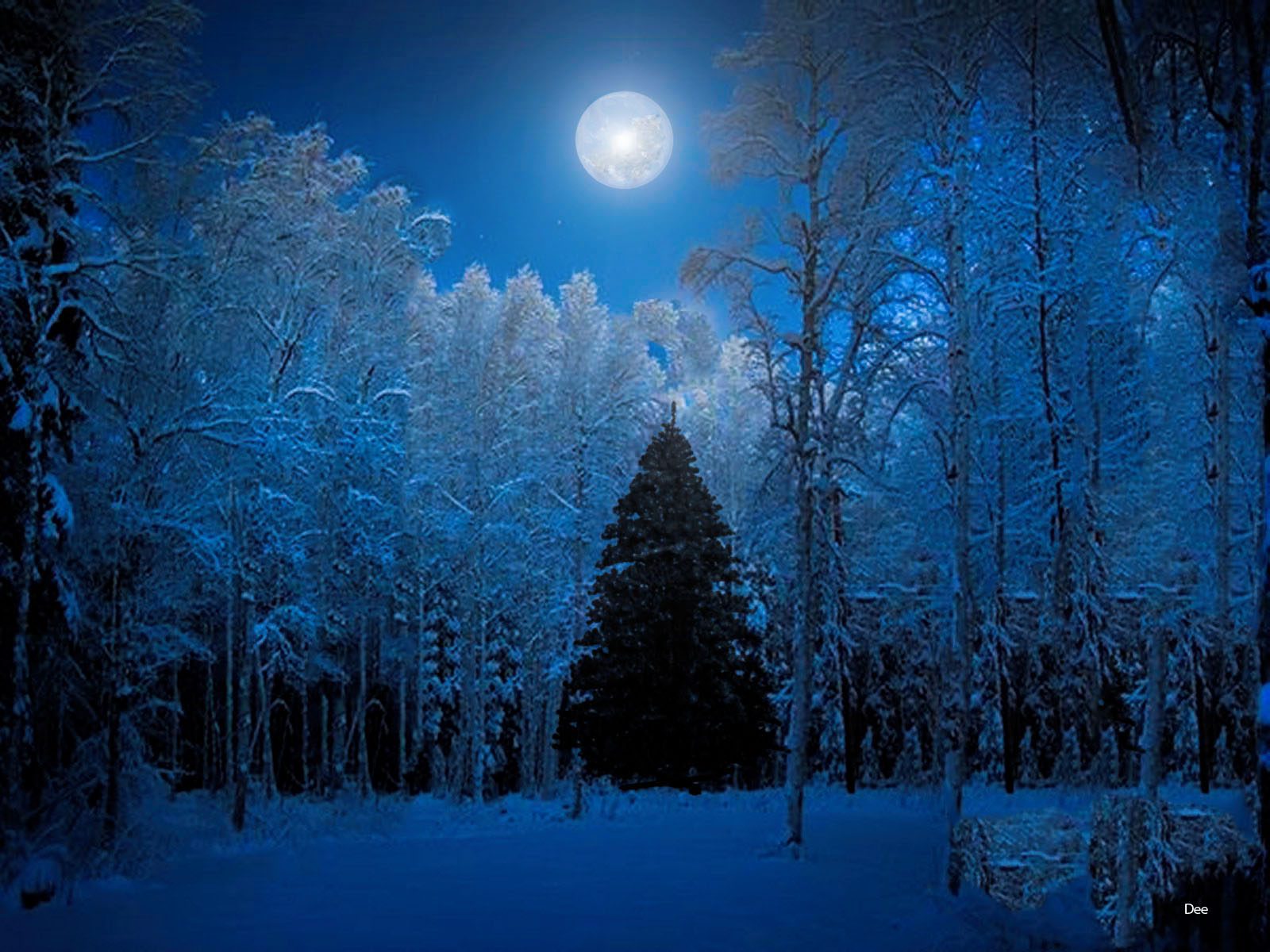 Blue Christmas Tree Forum Avatar: Snow Forest Wallpaper And Background Image
