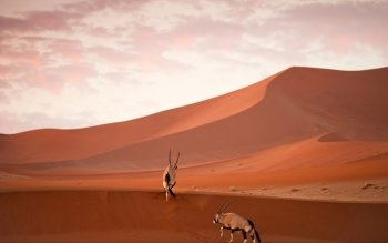 Earth - Desert Wallpapers and Backgrounds ID : 468339