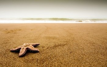 Animal - Starfish Wallpapers and Backgrounds ID : 471021