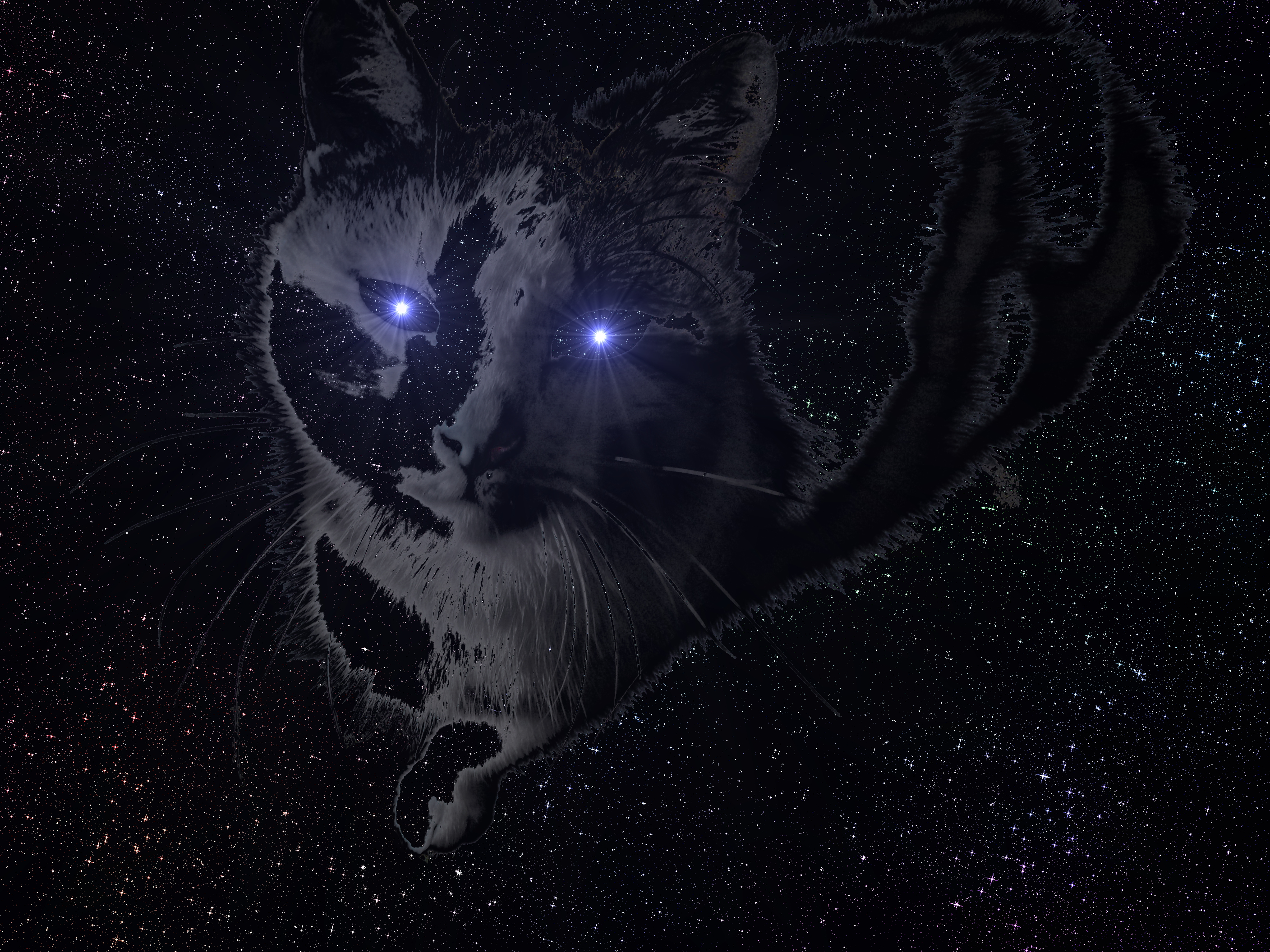 space cat HD Wallpaper | Background Image | 2816x2112 | ID ...