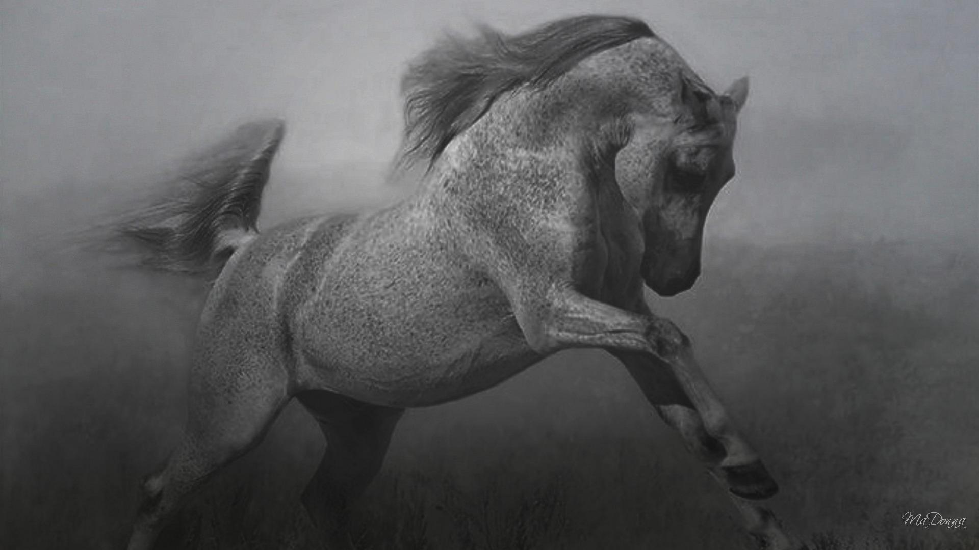 Horse Hd Wallpaper Background Image 1920x1080 Id 477581