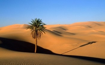 Earth - Desert Wallpapers and Backgrounds ID : 480461