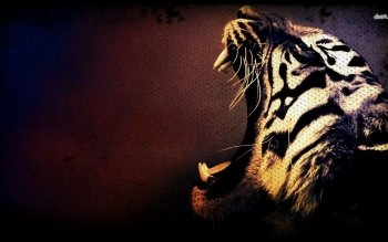 Tier - Tiger Wallpapers and Backgrounds ID : 480923