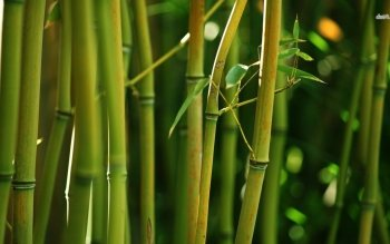 Tierra - Bamboo Wallpapers and Backgrounds ID : 481157