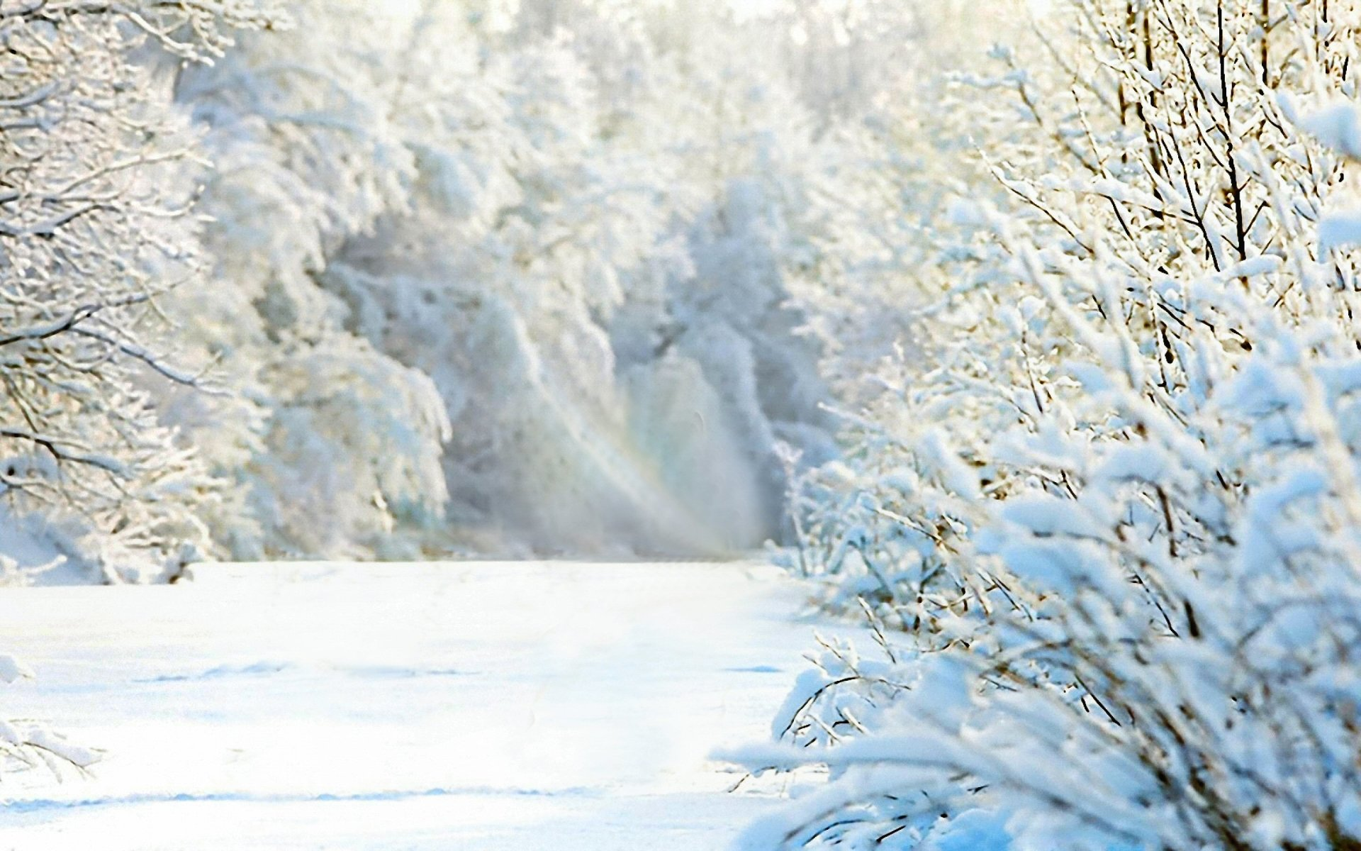 Earth - Winter  Scenic Nature White Snow Tree Wallpaper