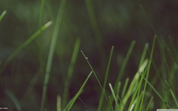 Earth - Grass Wallpapers and Backgrounds ID : 483217