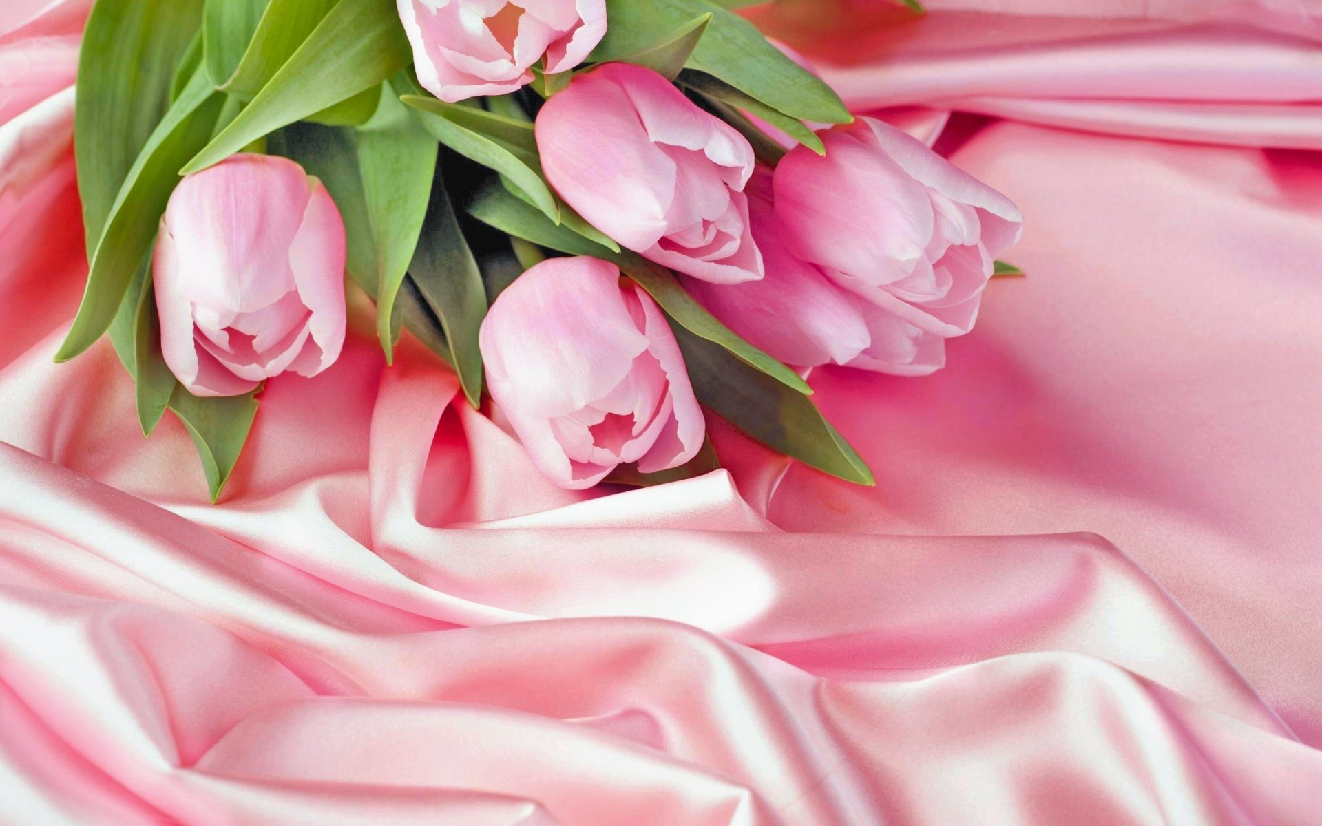 Earth - Tulip  Pink Flower Pastel Wallpaper