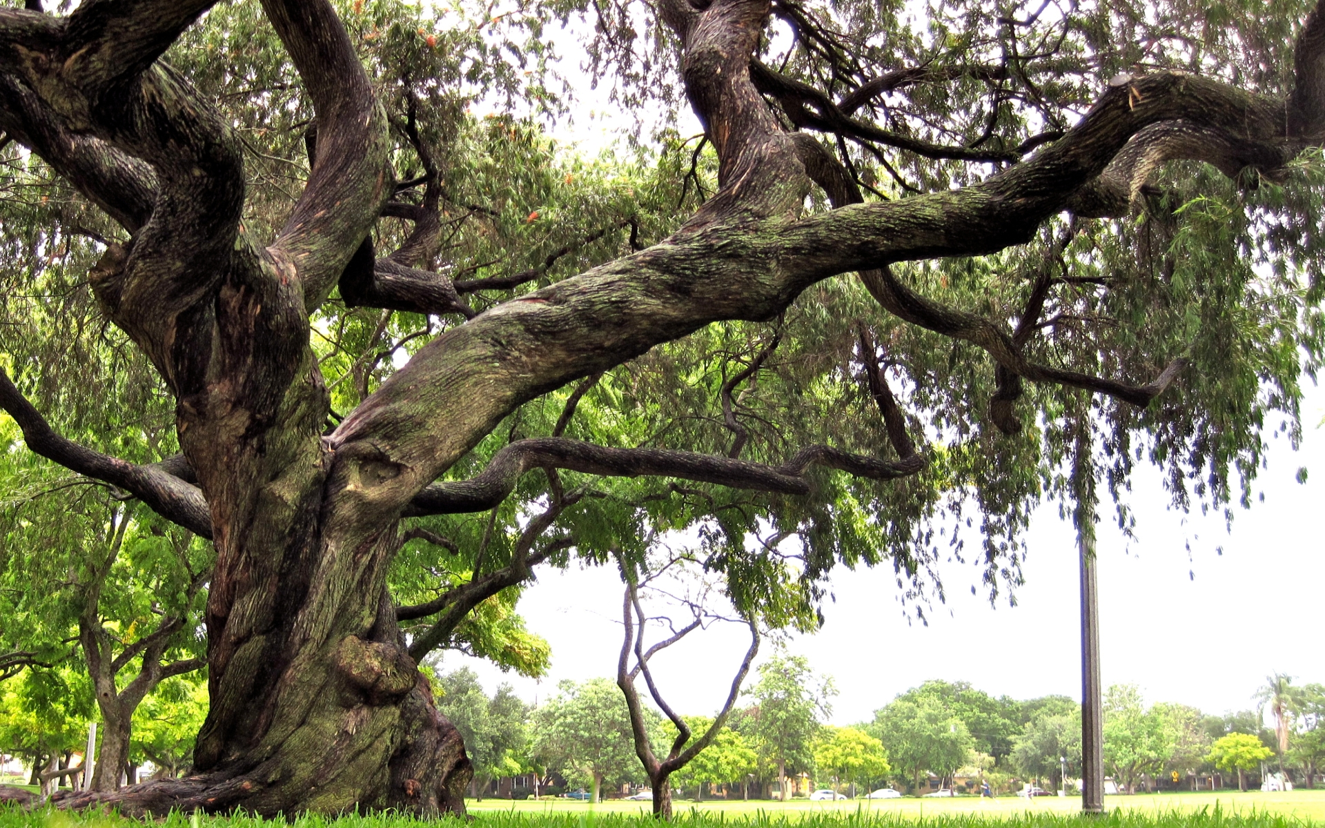 Image result for tree twisted