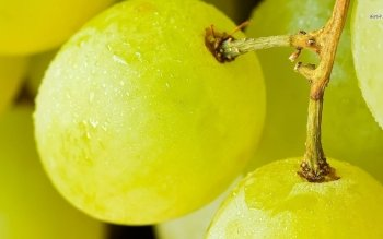 Food - Grapes Wallpapers and Backgrounds ID : 487154