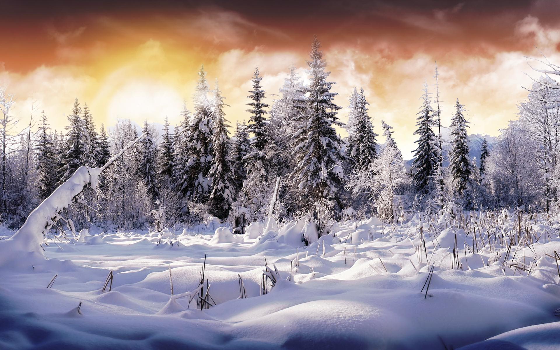 Earth - Winter  Earth Snow Tree Sky Cloud Wallpaper