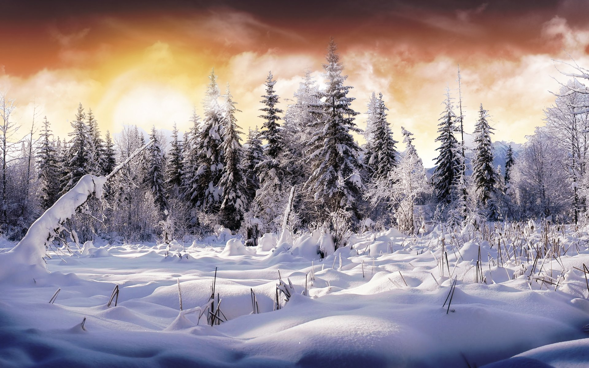 Earth - Winter  Earth Snow Tree Sky Cloud Wallpaper