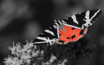 Animal - Butterfly Wallpapers and Backgrounds ID : 495798